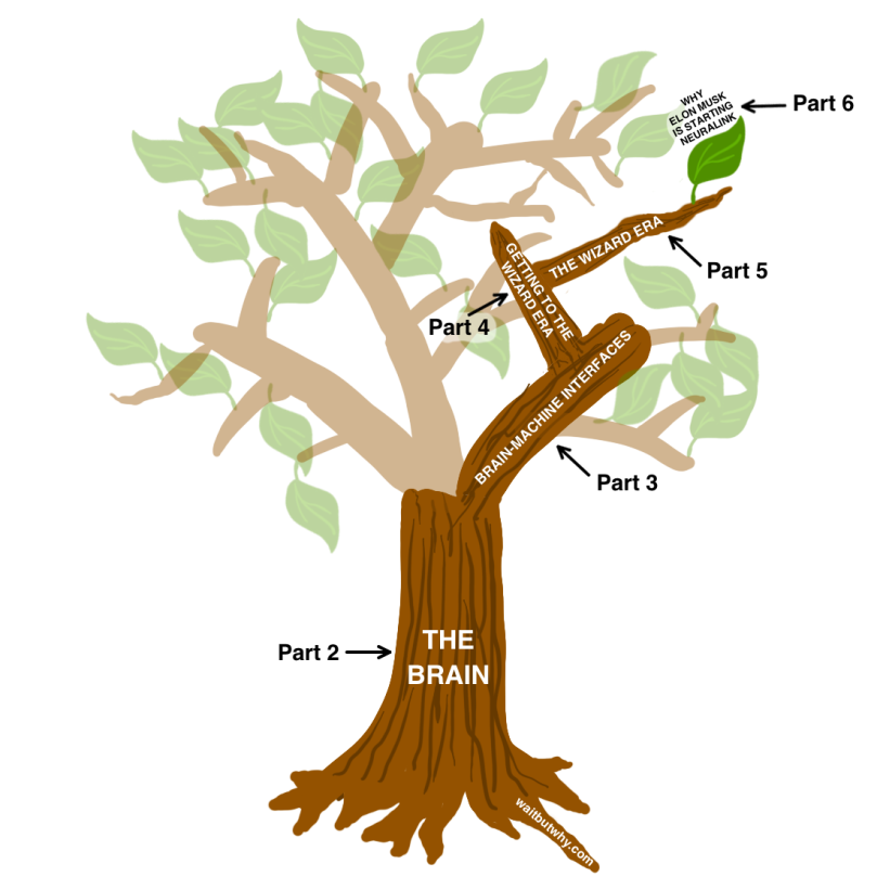 brain-tree-1
